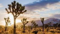 Joshua Tree Memorial Park Cremated Ashes Cremains California